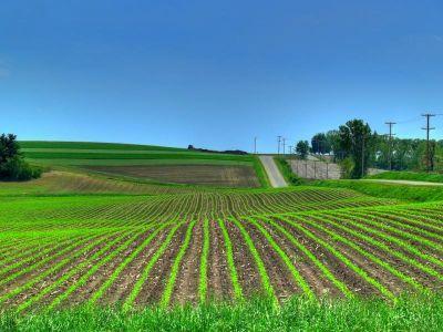 sarbii-au-restrictionat-vanzarea-terenurilor-agricole-catre-cetatenii-din-ue