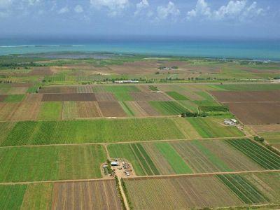 creditele-pentru-achizitionarea-de-terenuri-agricole-vor-fi-garantate-de-guvern