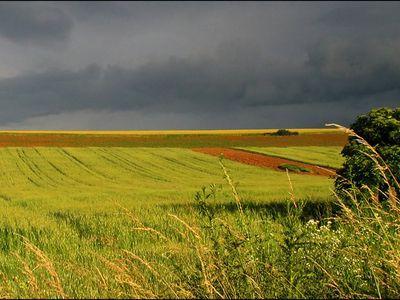 numarul-tranzactiilor-cu-terenuri-agricole-in-crestere-galopanta
