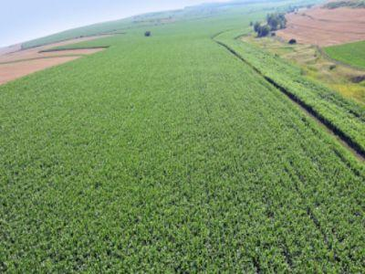 Fermierii trebuie sa detina cel putin un hectar de teren agricol pentru a primi subventii de la APIA