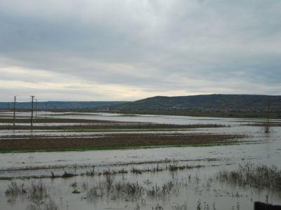 Culturile agricole din Gorj si Prahova, grav afectate de precipitatiile abundente