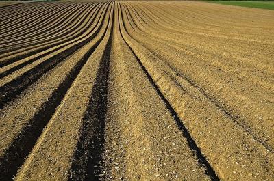 jumatate-din-terenurile-agricole-ale-tarii-detinute-de-fermieri-dezinteresati