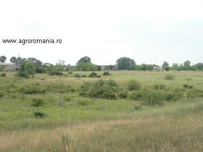 terenuri-agricole-romania-parloagele-insumeaza-anul-acesta-300000-de-hectare