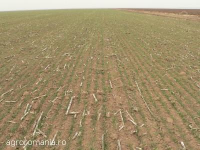 cine-va-avea-drept-de-preemtiune-la-cumpararea-terenurilor-agricole-arendasul-vecinul-tanarul-fermier-si-statul-roman