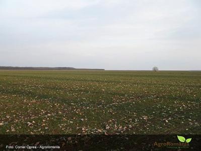 ministrul-roman-al-agriculturii-prezent-la-receptia-traditionala-din-deschiderea-saptamanii-verzi-la-berlin-vezi-cele-mai-importante-declaratii-ale-acestuia