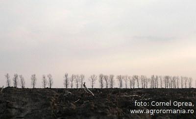 vanzarea-terenurilor-agricole-romanesti-catre-nerezidenti-aproape-o-certitudine