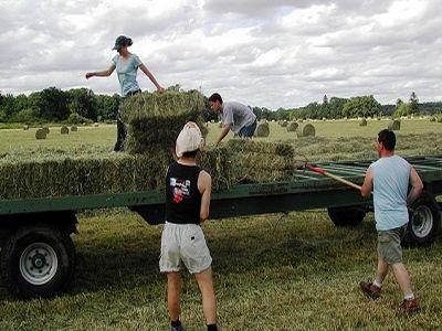 etapele-instalarii-tinerilor-fermieri