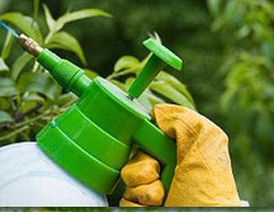 metode-ecologice-de-combatere-a-daunatorilor-si-ciupercilor