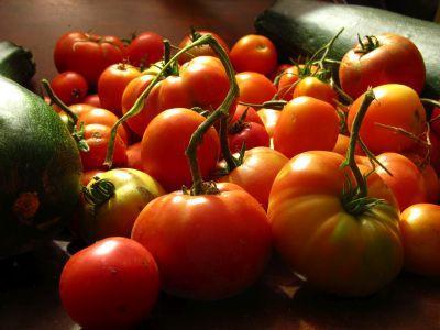 combaterea-bolilor-si-daunatorilor-la-tomate