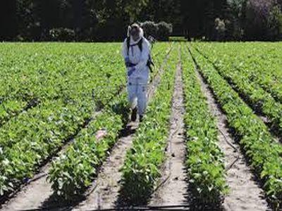 tot-ce-trebuie-sa-stie-un-agricultor-despre-fungicide