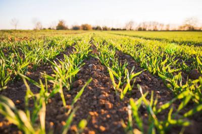 investitiile-in-agricultura-o-solutie-pe-timp-de-pandemie