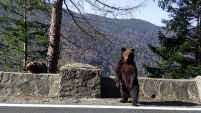garduri-electrice-pentru-cei-afectati-de-vizitele-ursilor-asigurate-de-stat
