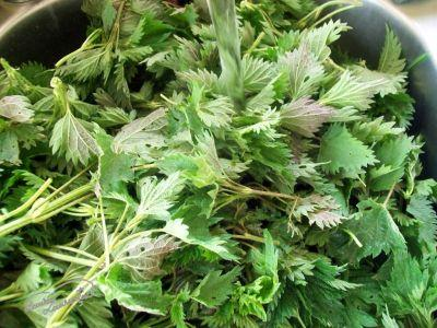 urzica-adevarata-farmacie-verde-la-indemana-oricui