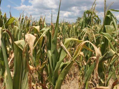 madr-vrea-sa-plateasca-in-avans-pana-la-sfarsitul-anului-despagubirile-pentru-fermierii-afectati-de-seceta