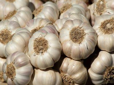 usturoiul-veritabil-antibiotic-natural