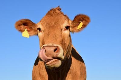 15-decembrie-termen-limita-de-depunere-a-cererilor-de-finantare-pentru-crescatorii-de-animale