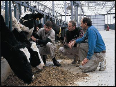 noi-controverse-intre-ansvsa-si-crescatorii-de-animale-pe-tema-vaccinului-contra-bolii-limbii-albastre