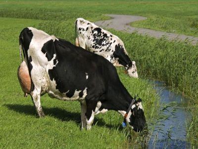 masuri-obligatorii-pentru-protectia-animalelor-in-perioada-de-canicula