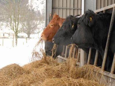 masuri-pentru-protejarea-animalelor-in-sezonul-rece