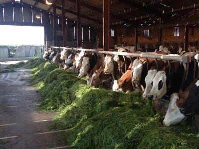 noi-criterii-de-eligibilitate-pentru-ajutorul-national-tranzitoriu-la-bovine-si-sprijinul-cuplat-pentru-vacile-de-lapte