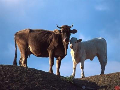 crescatorii-de-animale-din-zone-defavorizate-pot-sa-depuna-doar-pana-vineri-cererile-pentru-subventii