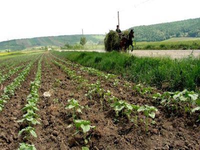 apia-va-incepe-plata-sprijinului-cuplat-in-sectorul-vegetal
