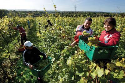 romania-a-avut-in-2011-cea-mai-mare-cretere-a-venitului-real-pe-agricultor-din-ue