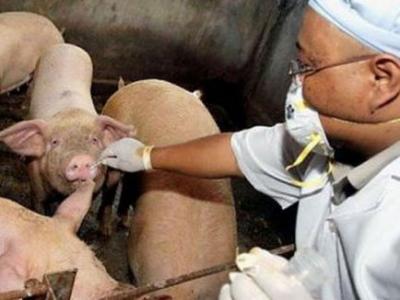 ambulante-pentru-veterinari-din-fonduri-europene