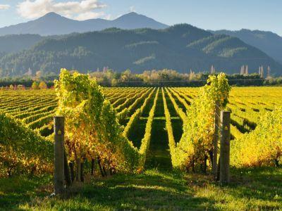 conditii-de-eligibilitate-pentru-acordarea-sprijinului-financiar-in-viticultura