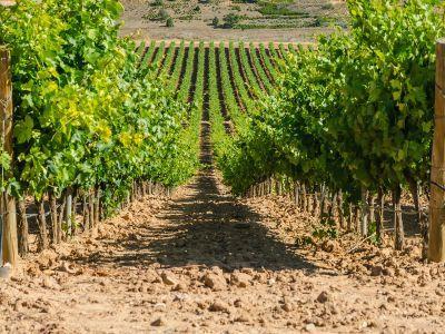 recomandari-privind-aplicarea-tratamentelor-fitosanitare-in-culturile-viticole