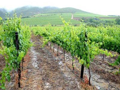a-fost-aprobat-sprijinul-din-fonduri-europene-pentru-sectorul-vitivinicol