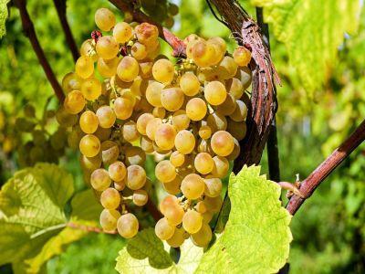 o-noua-schema-de-ajutor-de-minimis-pentru-masura-de-promovare-a-vinurilor-in-tari-terte