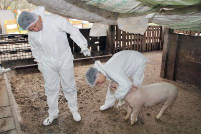 un-nou-virus-cu-potential-pandemic-descoperit-in-china-se-desprinde-din-h1n1