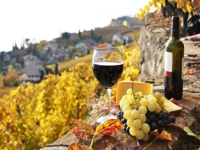 Finantari de 240 de milioane de euro din bani europeni, pentru sectorul vitivinicol