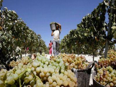 viticultorii-vor-primi-bani-pentru-sa-si-construi-crame-si-magazine-pentru-comercializarea-vinului