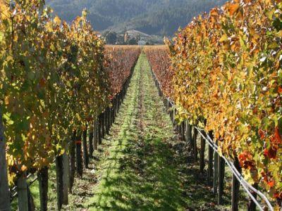 viticultura-romaneasca-se-dezvolta-pe-bani-europeni