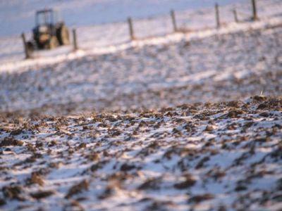 agricultorii-vor-cere-despagubiri-pentru-pagubele-provocate-de-zapada-mieilor