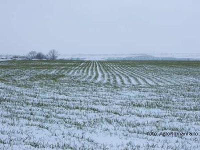 ion-sandu-anm-daca-gerul-venea-fara-zapada-agricultura-era-compromisa-anul-acesta