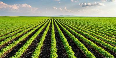 eurostat-romania-are-doua-dintre-zonele-cele-mai-specializate-in-agricultura