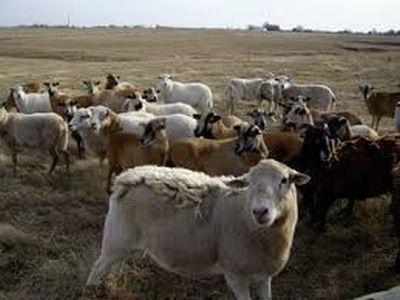 productia-zootehnica-a-atins-25-de-miliarde-de-lei-in-numai-trei-ani